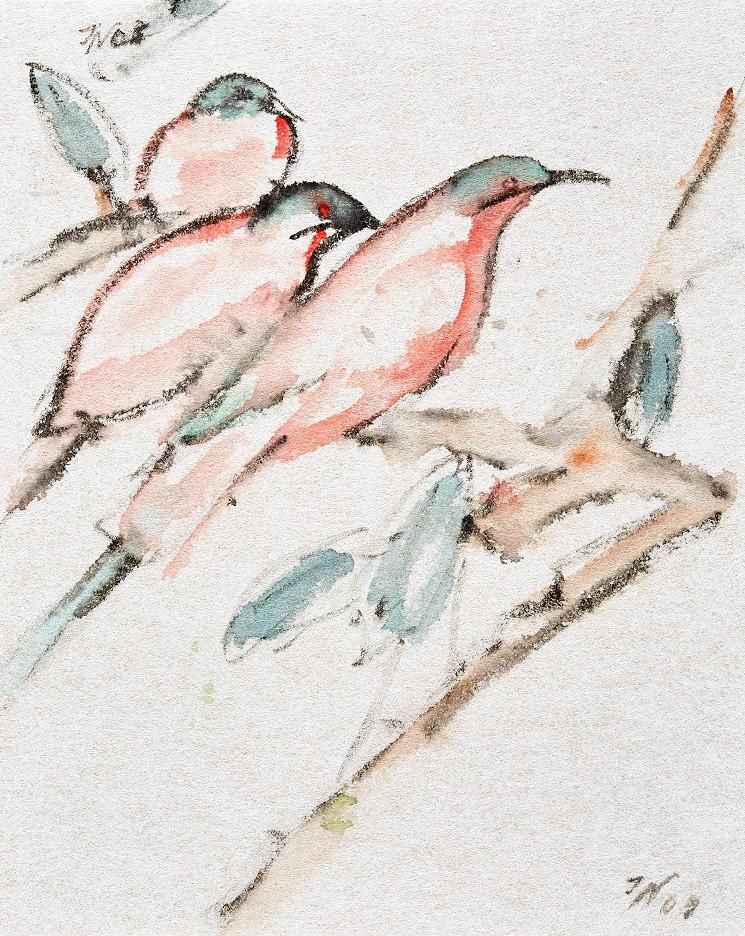 Papagei-Amadinen