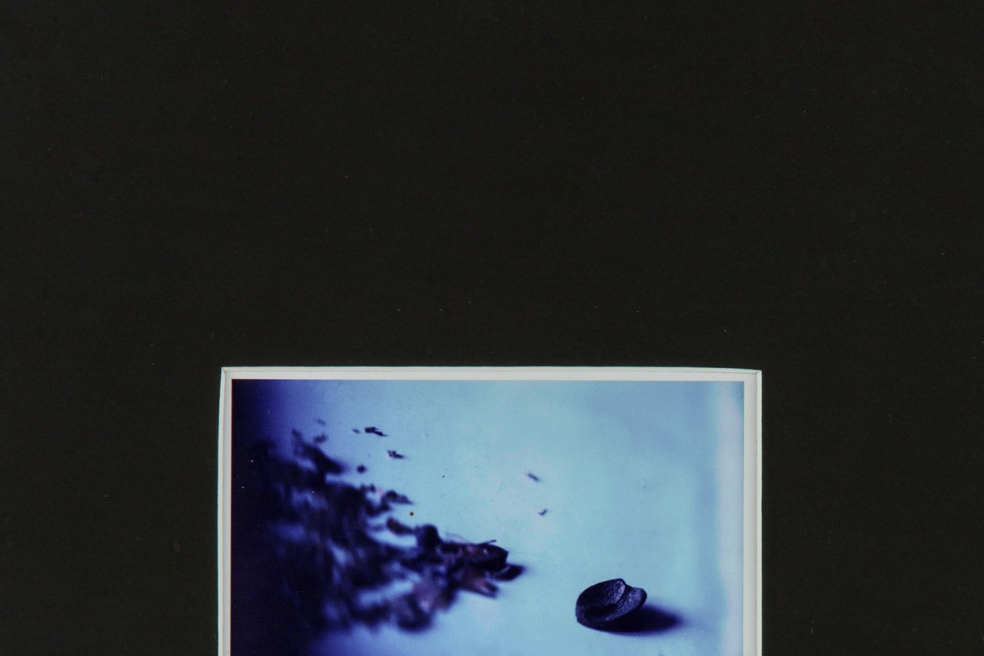pola-flora - Tafel 1