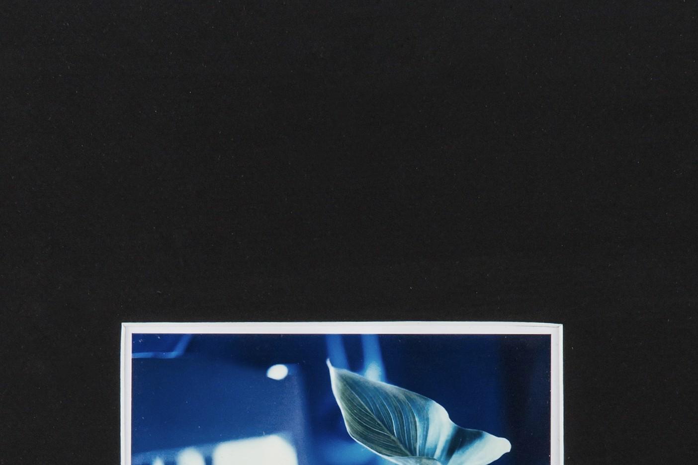 pola-flora - Tafel 4