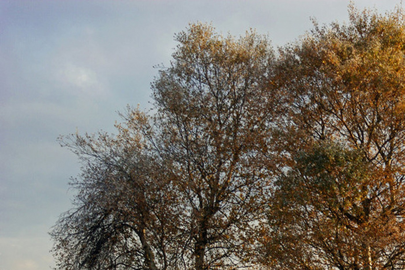 Herbstgesang